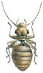 Dust louse