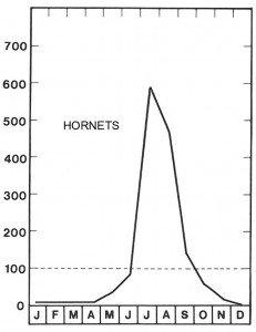 High season for hornets in July