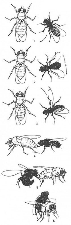 Insects' and mites' foreplay