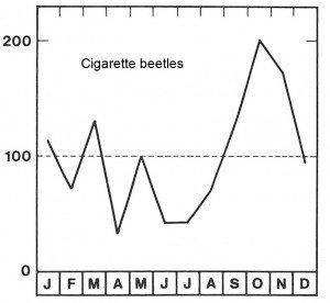 Season for cigarette beetle