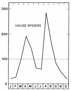 Season for house spiders