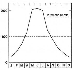 Season for the dermestid beetle