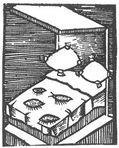 Woodcut by Plinius of human flea