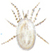 Chicken flea