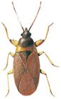 Cone bug