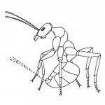 Ant spraying formic acid