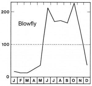 Blowfly season