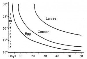 Development rates of the granary weevil eggs