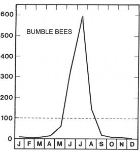High season for bumblebee
