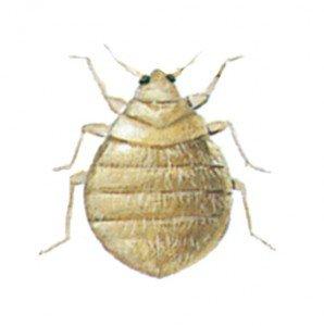 Martin bug