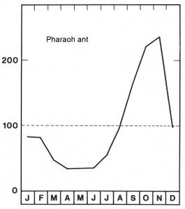 Season for Pharaoh ants