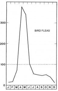Season for bird fleas