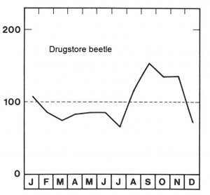 Season for drugstore beetle