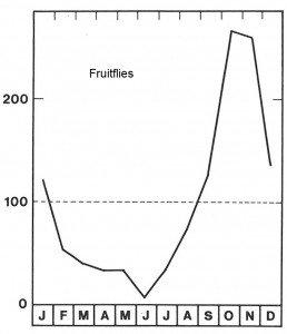 Season for fruitflies