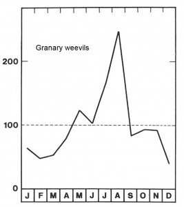 Season for granary weevils