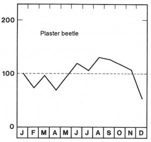 Season for plaster beetles