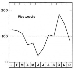 Season for rice weevils