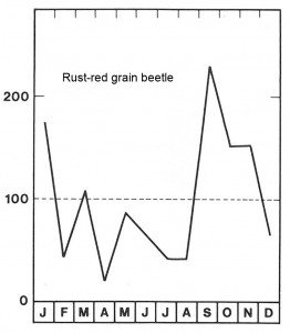 Season for rust-red grain beetle