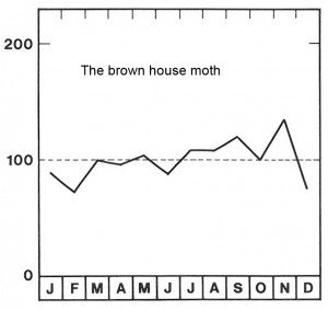 Season for the brown house moth