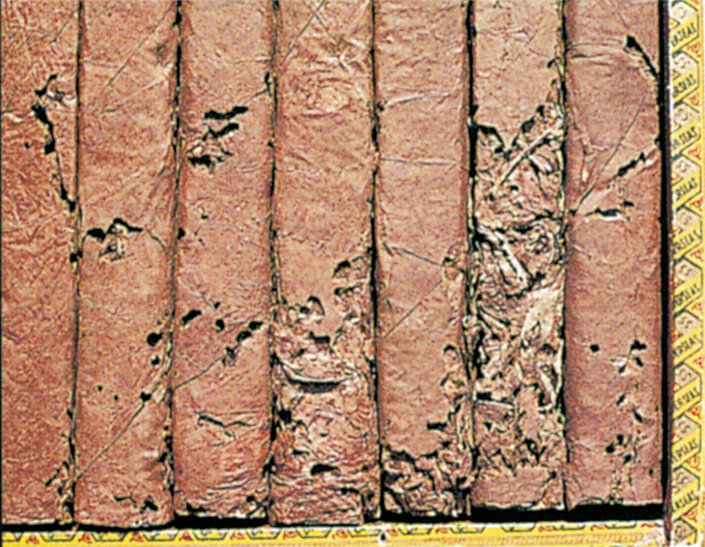 Tobacco beetle larvae in cigars