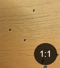 Ambrosia beetle exit-holes in timber